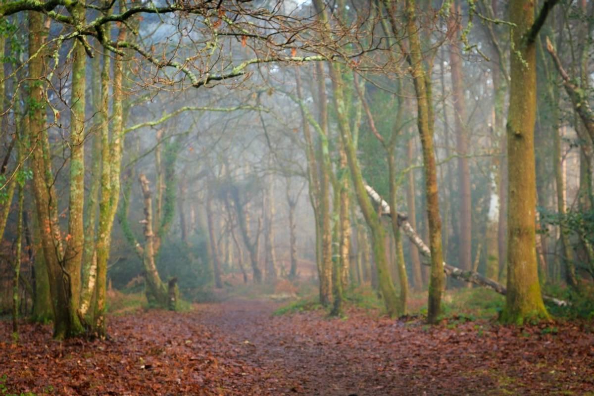 Delph Woods, Poole, Dorset