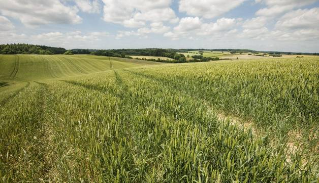 a view of the Chiltern Way as it passes through Buckinghamshire with a landscape of rolling hills.
