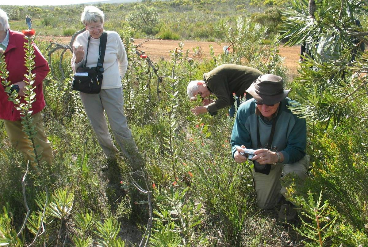 Photographing Woolly Banksia