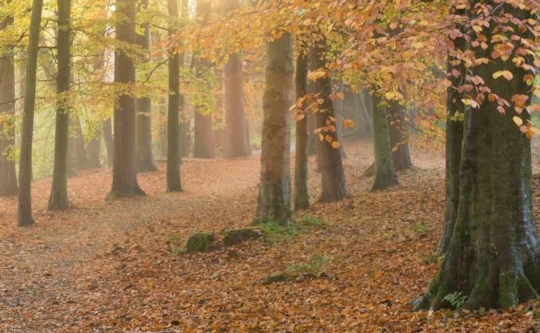 Southern Yorkshire Dales - Spring and Winter Walking - AdobeStock_128058207.jpeg