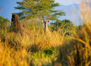 Zambia & Malawi - The Best of Africa