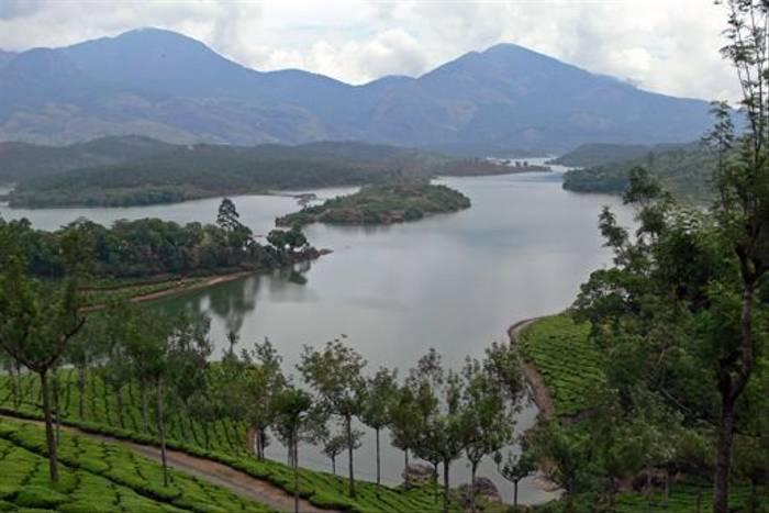 Tea plantations, Kerala (Tim Melling)