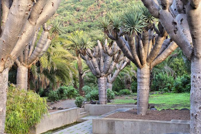 Jardin Canario, botanical gardens shutterstock_416422480.jpg