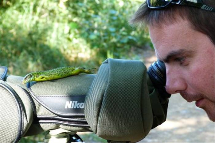 A very tame Green Lizard! (Tom McJannet)