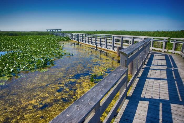 Point Pelee National Park, Ontario, Canadashutterstock_501652753.jpg
