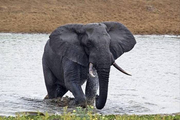 Elephant in water (Leon Marais)