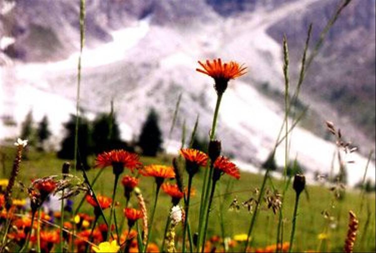 The Italian Dolomites (Su Gough)