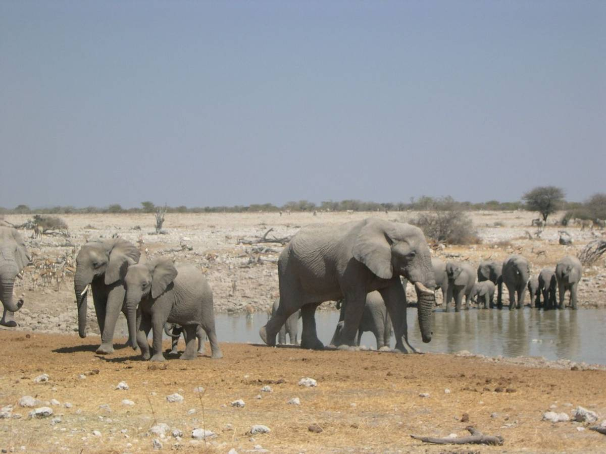 Elephants Etosha National Park
