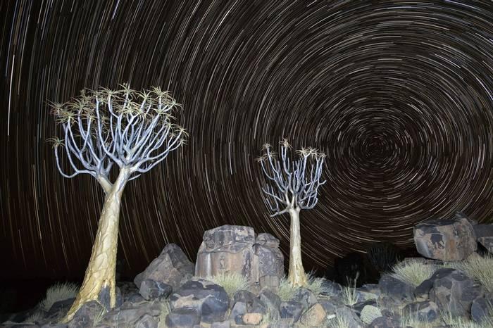 Quiver Trees And Star Trails, Mesosaurus Fossil Site, Keetmanshoop © R Harvey