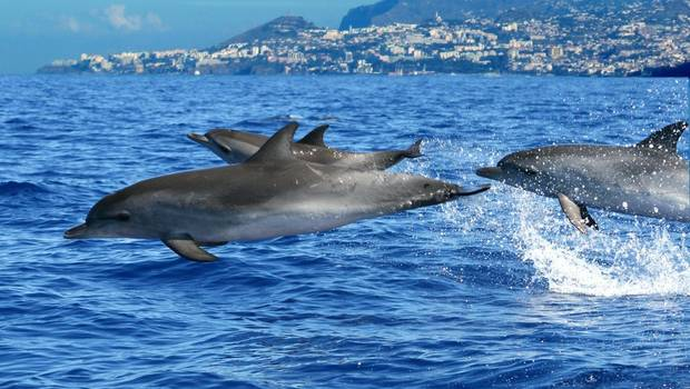 Madeira - Whales, Dolphins and Volcanic Landscapes