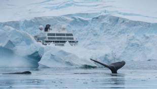 Whale And Ship Neko Harbour Antarctica HGR 118114