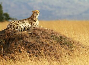 Wildlife of Kenya's Masai Mara