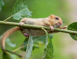 Hampshire - A day with small mammals