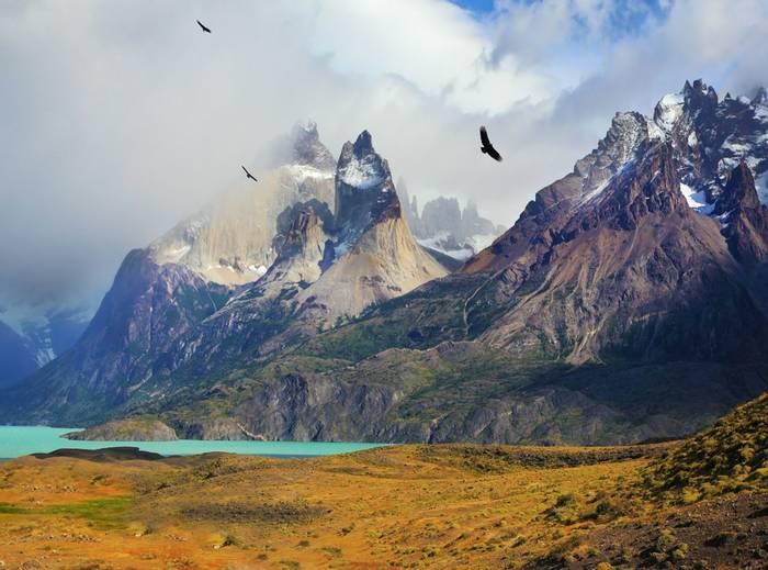 Condor, Torres Del Paine, Chile Shutterstock 256989904