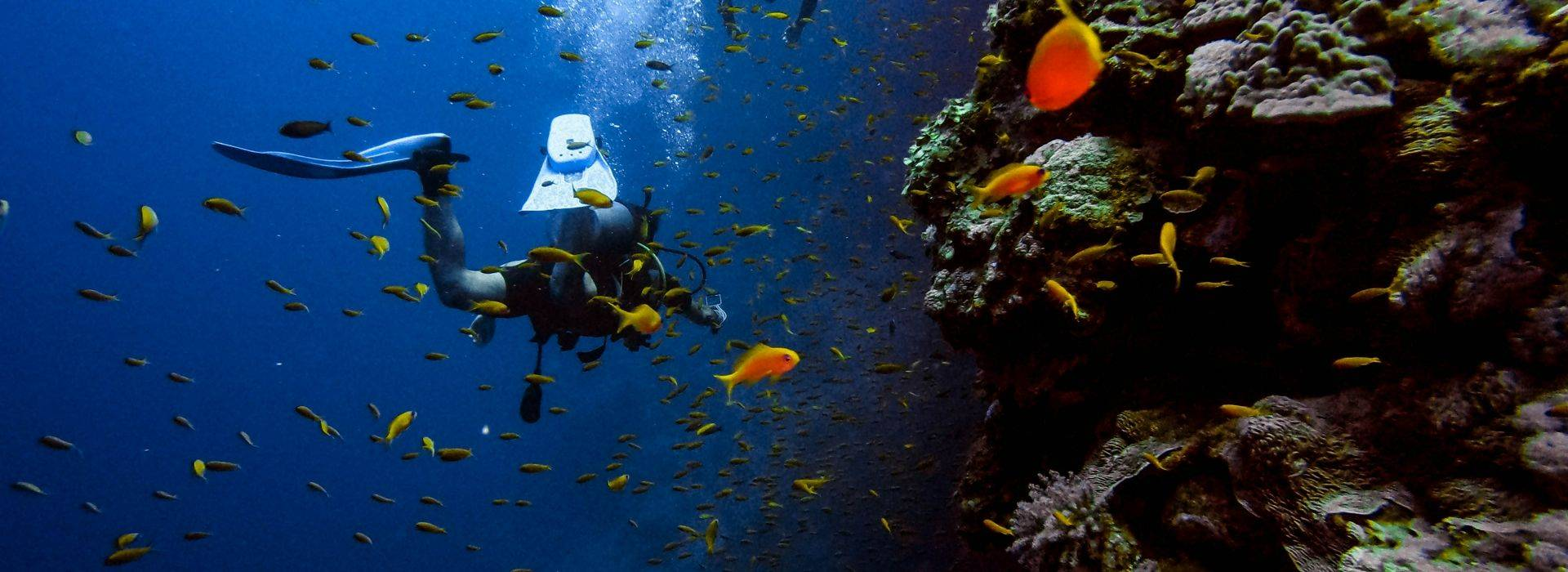 Diving Vacations