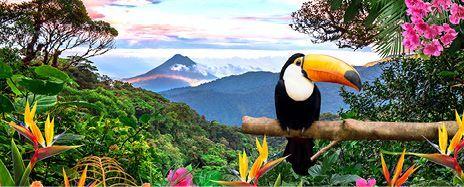 Costa Rica Escape & Caribbean Cruise