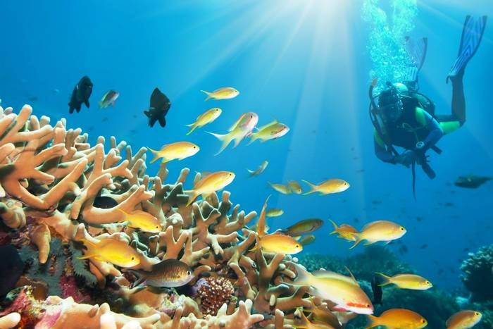 Diving underwater Borneo. shutterstock_28472173.jpg