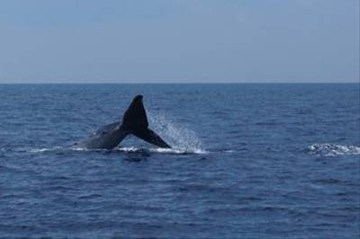 Blue Whale by Mark Clayden