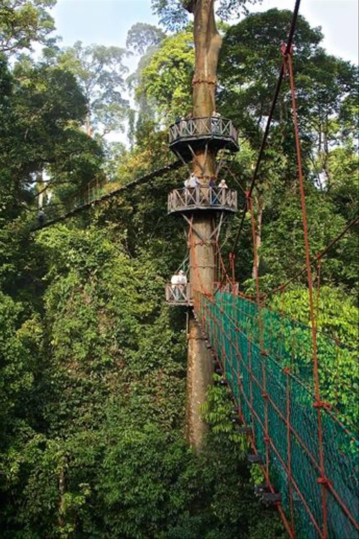 Rainforest walkway (Dani Free)