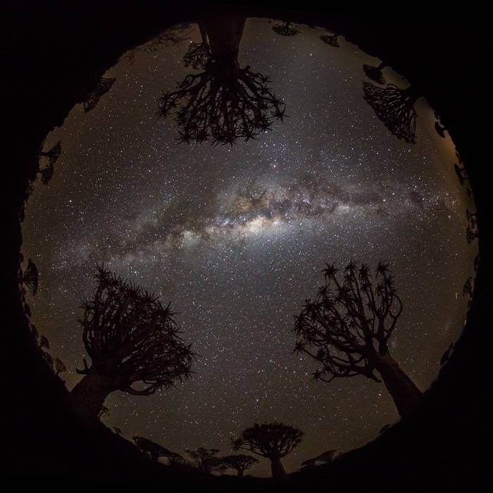 Quiver Trees And Milky Way, Quiver Tree Forest, Keetmanshoop © R Harvey