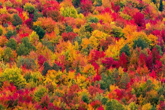 Autumn colours, Canada, shutterstock_476935960.jpg