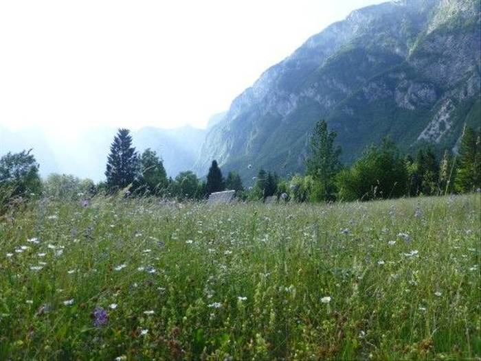 Meadows above Mostince Gorge