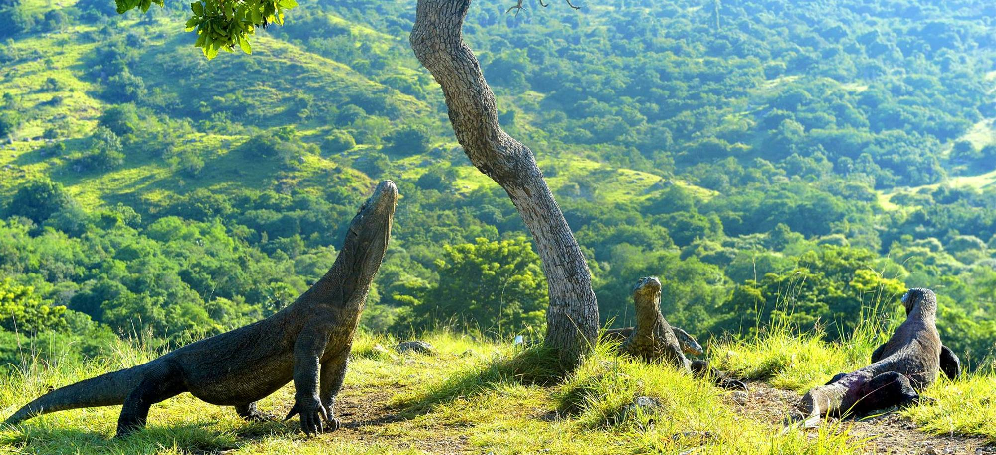 Komodo Island   Komodo Dragons   Itinerary Desktop