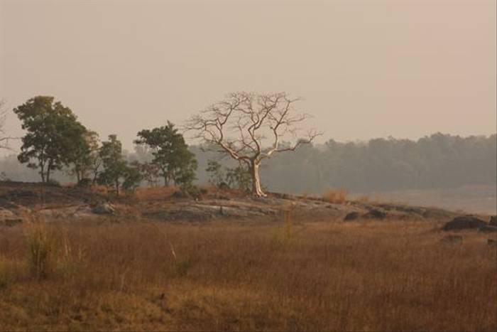 Kanha National Park (Tony Yeomas)