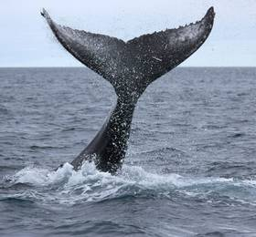 Whale watching boat trip and Northern Lights hunt by bus