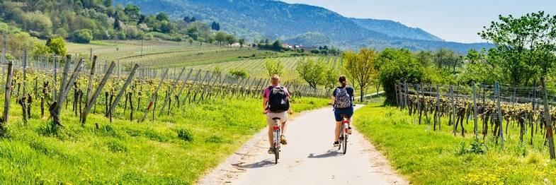 cyle-winery-shutterstock.jpg