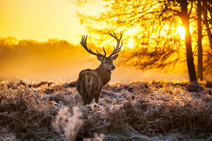 Red Deer, Richmond Park, London, United Kingdom shutterstock_130328384.jpg