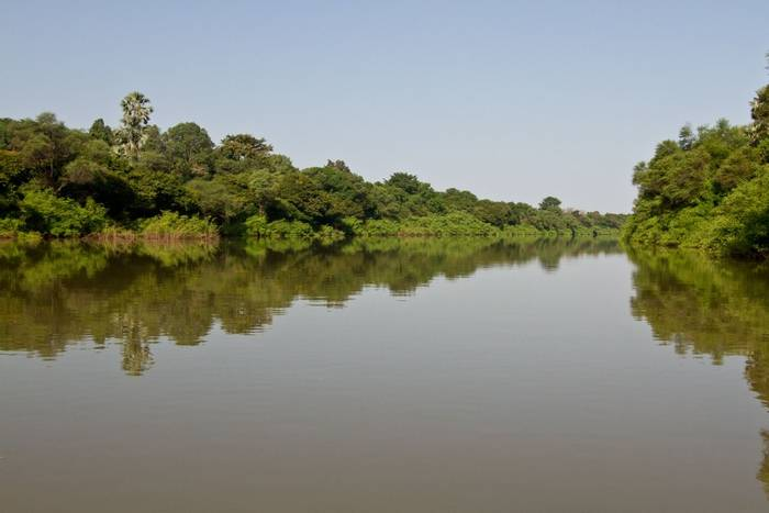 Senegal River forest, The Gambia shutterstock_140134090.jpg
