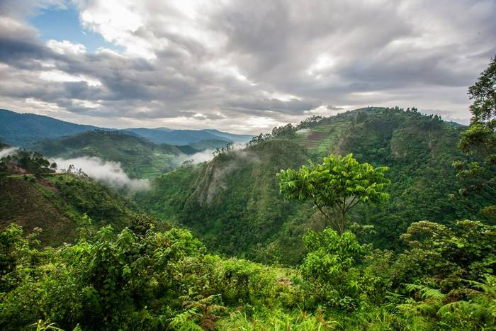 Bwindi Impenetrable Forest National Park, Uganda shutterstock_446347579.jpg