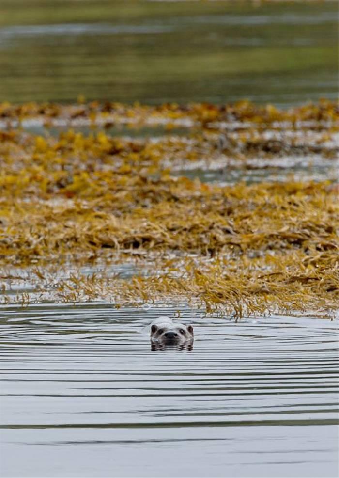 Otter (Marcus John)