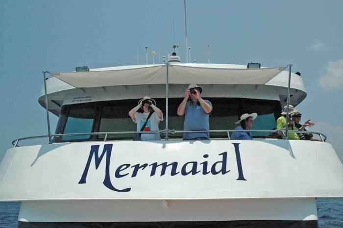Cetacean spotting from MV Mermaid (Charles Anderson)