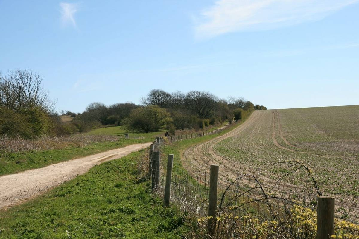 South Downs Way Kithurst Hill.JPG