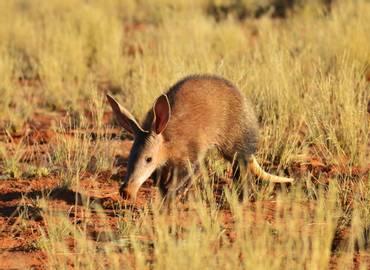 South Africa's Rare Mammals