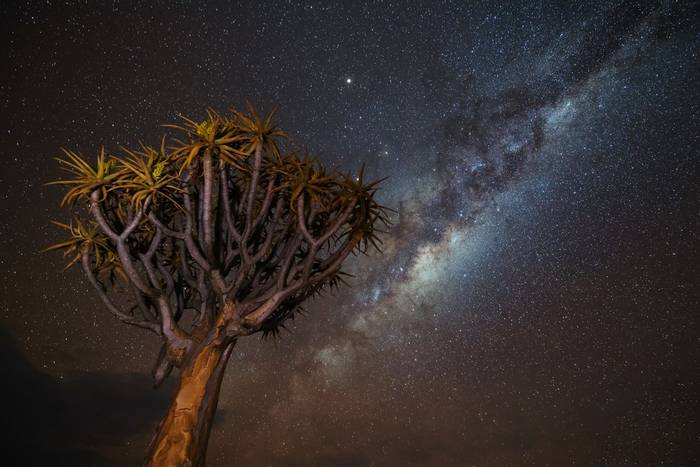 Milky Way over Quiver Tree, Namibia