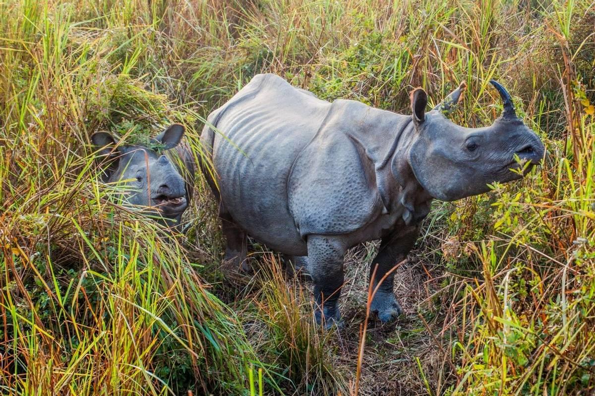 One Horned Rhino, Kaziranga Shutterstock 783021385
