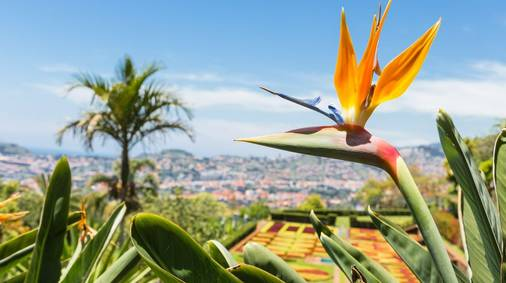Gardens of Madeira