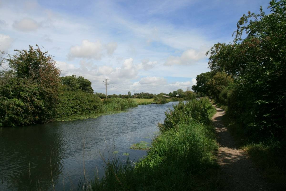 Chichester Canal Summer.JPG