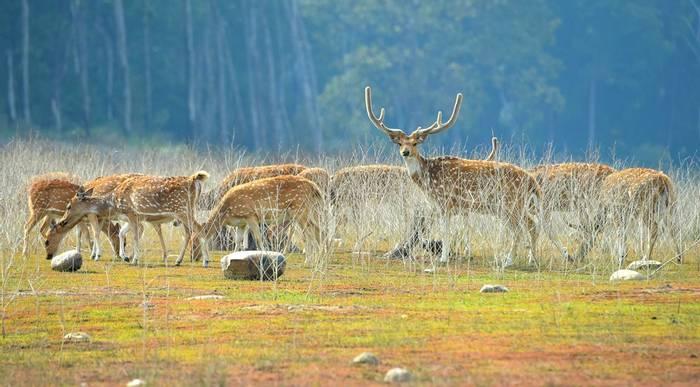 Spotted deer Corbett National Park, India shutterstock_571317004.jpg