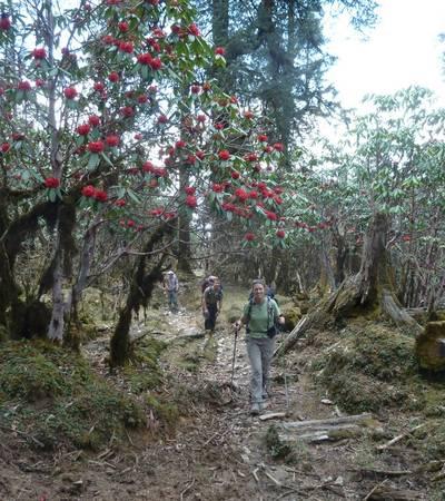 Trail to Myangal Bhanjang (2,975m)