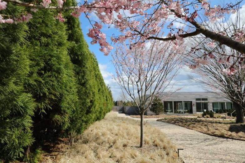 shou-sugi-ban-house-property-cherryorchard2.JPG