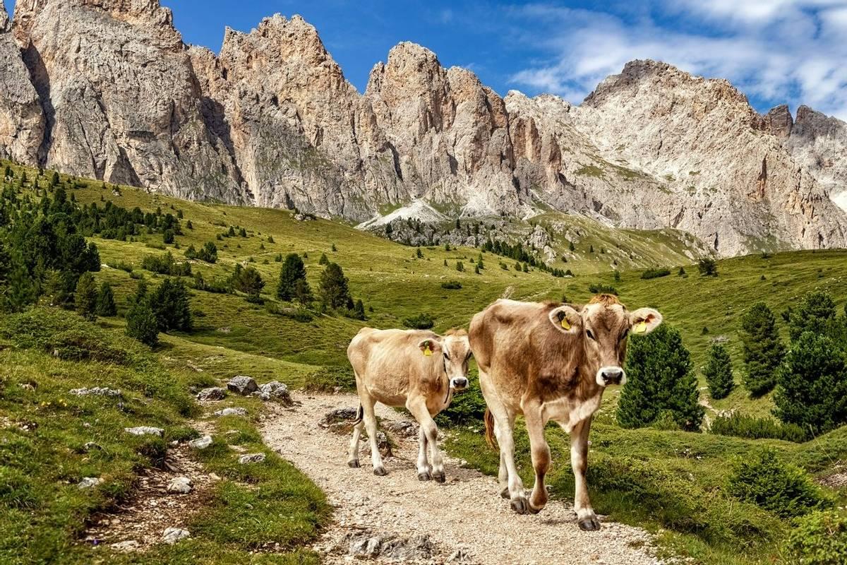 Firenze Hut, Col Raiser Alp, Val Gardena, Dolomite Alps, Trentino-Alto Adige, Italy, xxl+more: bartussek.xmstore