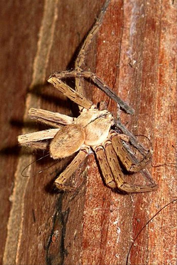 Spider sp. (Kiera Griffin)