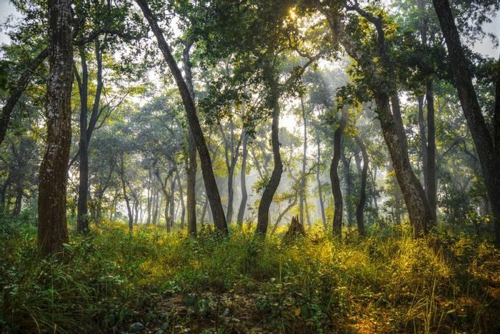 Chitwan National Park, Nepal shutterstock_577285777.jpg