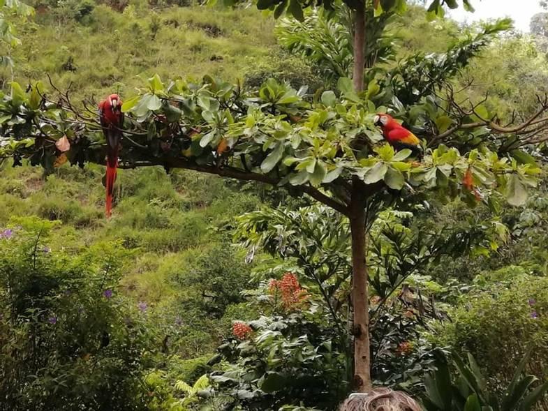 lapazul-retreat-parrots.jpg