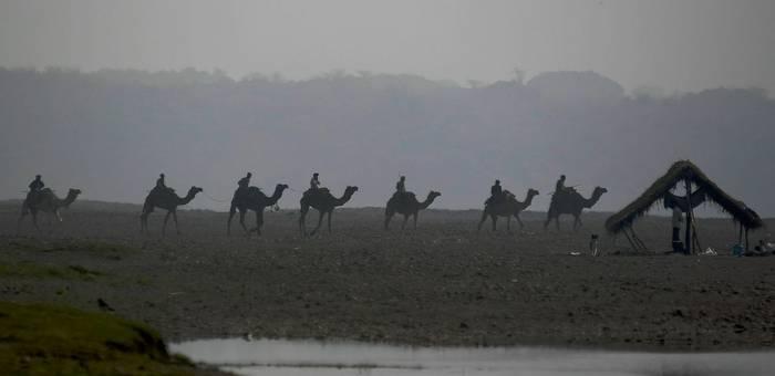 Camel Train - Chambal River (Neil Pont)