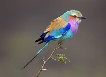 Botswana's Desert & Delta (Birds)